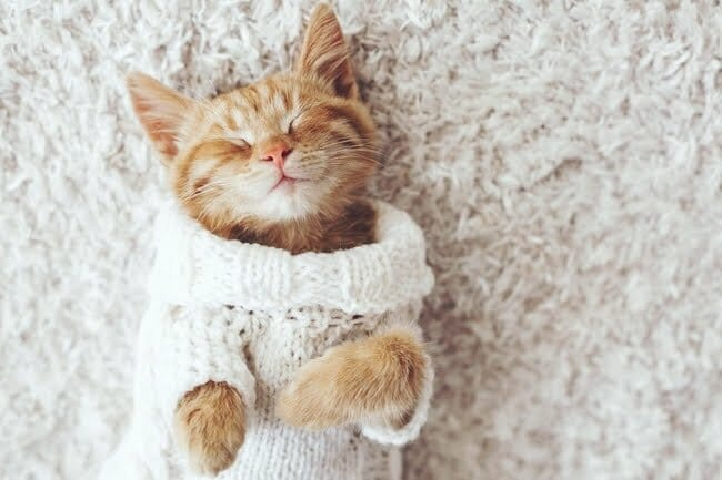 Small orange cat wearing knitted sweater