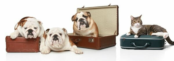 Three dogs and one cat all sitting on suitcases