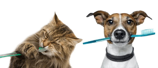 Dog and cat both with toothbrushes in their mouths