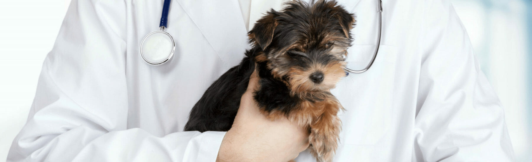 Small black dog being held by a veterinarian