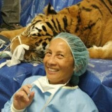 Lady taking a photo with a tiger